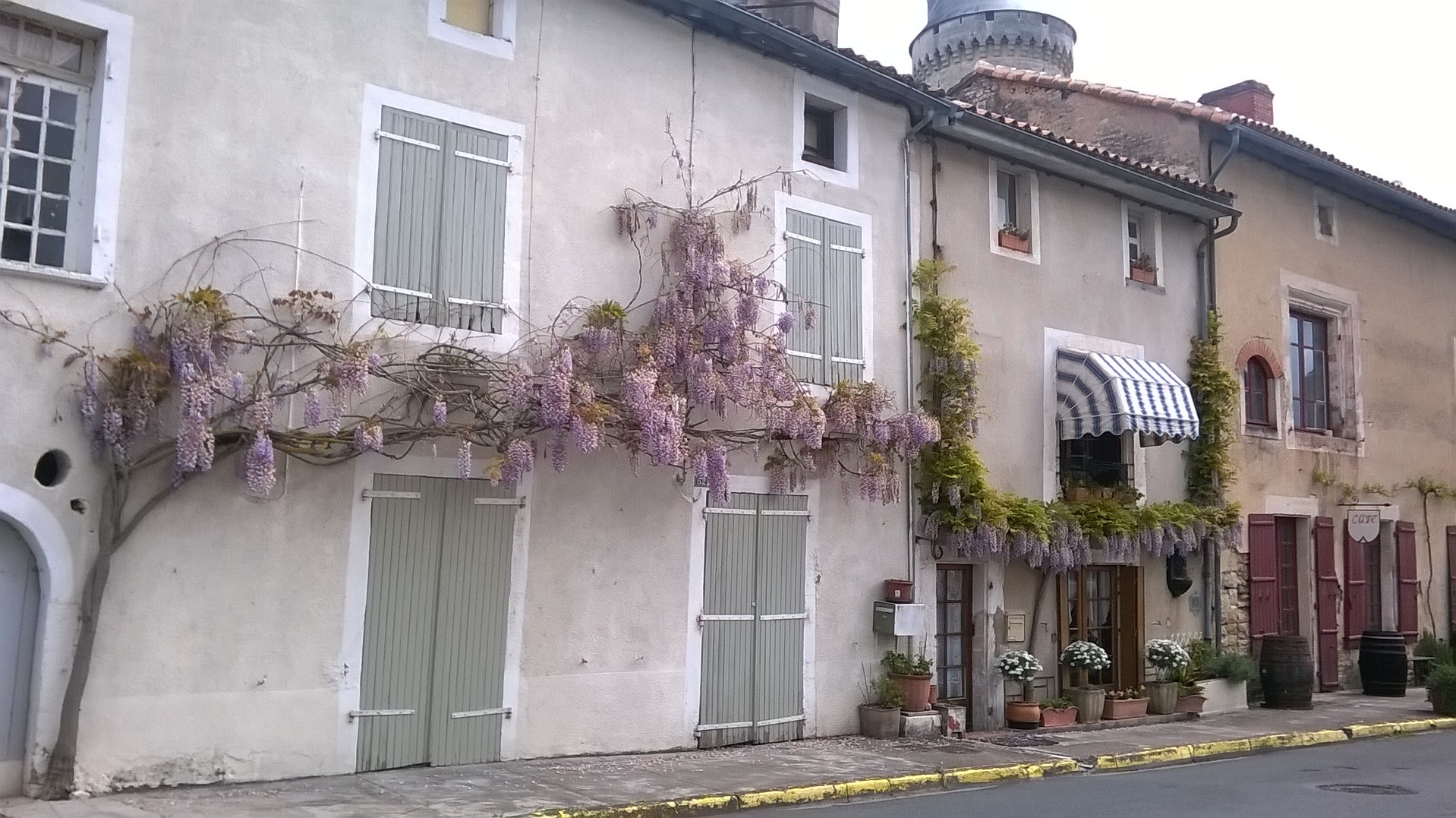 Local wisteria and wine bar